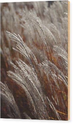 Wood Print featuring the photograph Windblown Grass by Ken Dietz