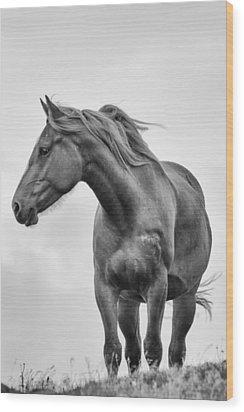 Windblown Horse Wood Print by Tracy Munson