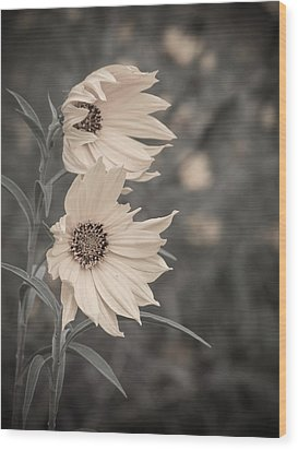 Windblown Wild Sunflowers Wood Print