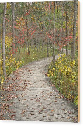 Wood Print featuring the photograph Winding Woods Walk by Ann Horn