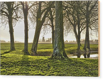 Windmill And Trees In Groningen Wood Print
