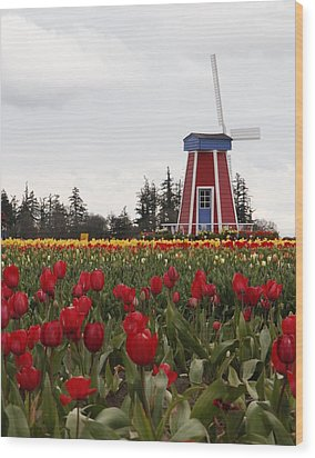 Windmill Red Tulips Wood Print by Athena Mckinzie