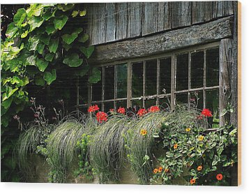 Window Boxes Wood Print