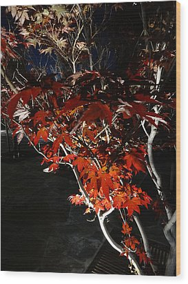 Window Of Sky And Flamed Leaves In My Eye Wood Print by Kenneth James