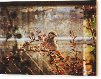 Window Wren Wood Print by Dan Quam