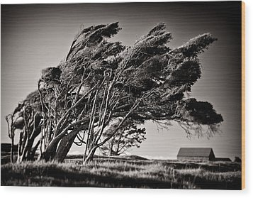 Windswept Wood Print by Dave Bowman