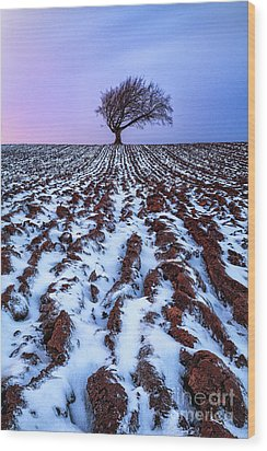 Windswept Tree Scotland Wood Print by John Farnan