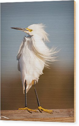Windy Egret Wood Print by Tammy Smith