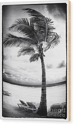 Windy Palm Wood Print by John Rizzuto