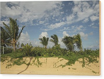 Windy Palms Wood Print by Mustafa Abdullah
