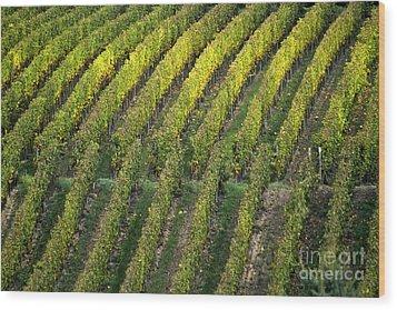 Wine Acreage In Germany Wood Print by Heiko Koehrer-Wagner