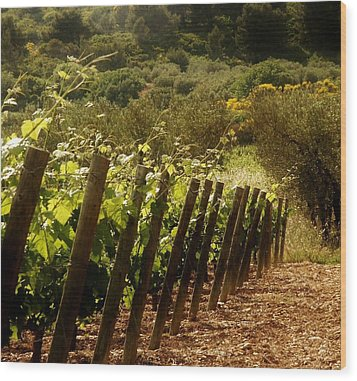 Wine Growing Pouring And Enjoying  Wood Print by Christine Burdine