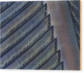 Wing Feather Detail Of Swallow Sem Wood Print by Science Photo Library