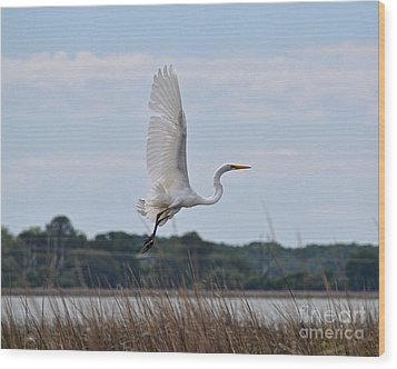 Wood Print featuring the photograph Wings by Carol  Bradley