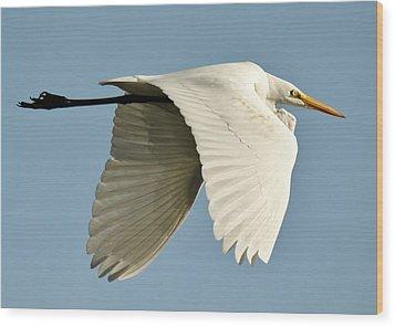 Wings Down Wood Print by Paulette Thomas