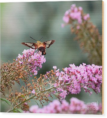 Wood Print featuring the photograph Wings In The Flowers by Kerri Farley