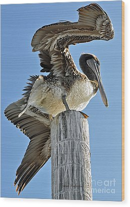 Wings Of A Pelican Wood Print by Susan Wiedmann