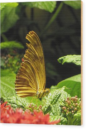 Wings Of Gold Wood Print