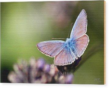 Wings Of Tenderness Wood Print