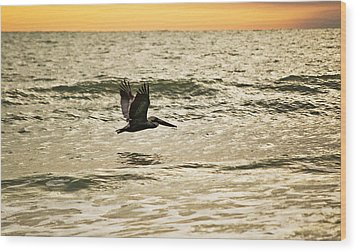 Wings Over Water Wil 270 Wood Print by G L Sarti