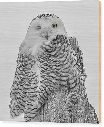 Winking Snowy Owl Black And White Wood Print by Thomas Young