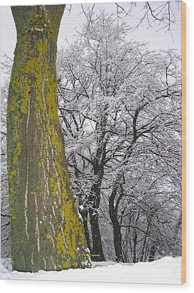 Winter  4  Wood Print by Vassilis Tagoudis