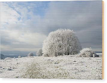 Winter Wood Print by Anne Gilbert