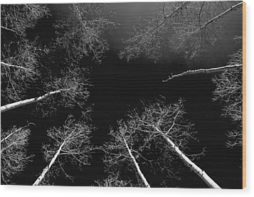 Wood Print featuring the photograph Winter Aspen  by Eric Rundle