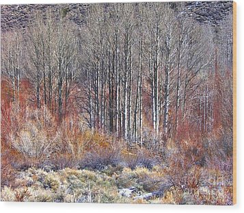 Winter Aspen Wood Print by Marilyn Diaz