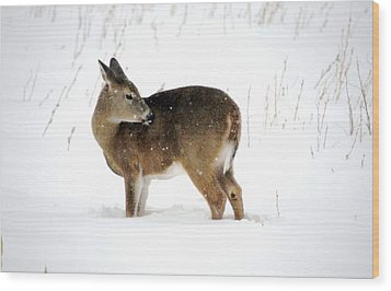 Wood Print featuring the photograph Winter Bath Time by Dacia Doroff