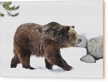Winter Bear Walk Wood Print