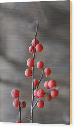 Wood Print featuring the photograph Winter Berries by Vadim Levin