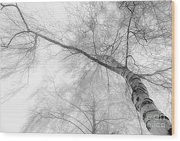 Winter Birch - Bw Wood Print by Hannes Cmarits