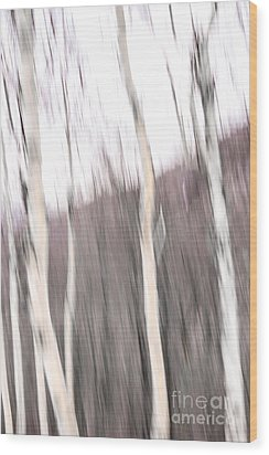 Winter Birches Tryptich 1 Wood Print