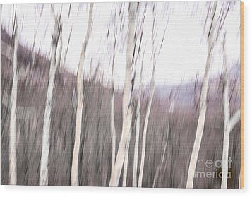 Winter Birches Tryptich 2 Wood Print by Susan Cole Kelly Impressions