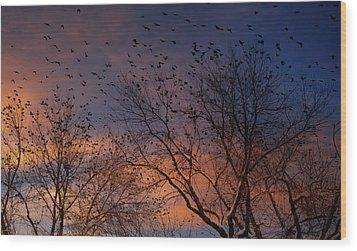 Winter Birds Wood Print by Utah Images
