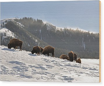 Winter Bison Herd In Yellowstone Wood Print by Bruce Gourley
