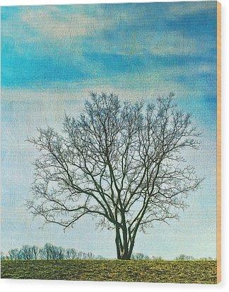 Winter Blues Wood Print by Gary Slawsky