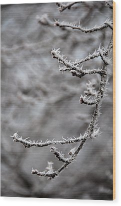 Winter Branch Wood Print by Mary Katherine Powers