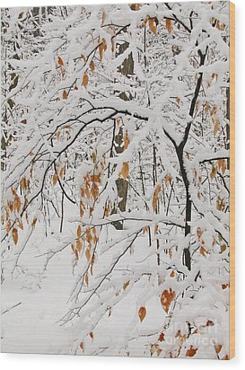 Wood Print featuring the photograph Winter Branches by Ann Horn