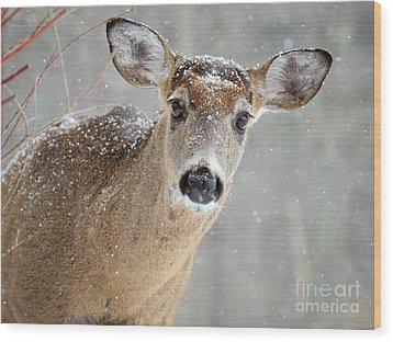 Winter Buck Wood Print
