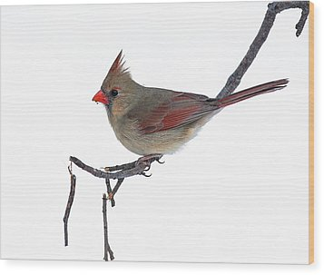 Winter Cardinal II Wood Print