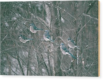 Wood Print featuring the photograph Winter Conference by David Porteus