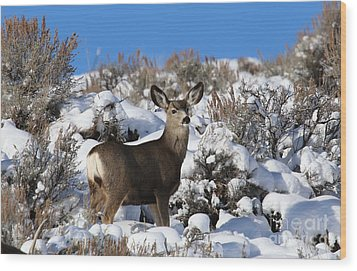 Winter Doe Wood Print