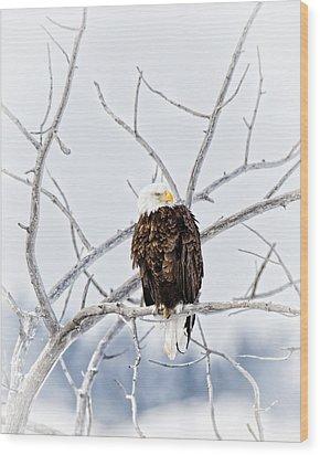 Winter Eagle Wood Print by Jana Thompson