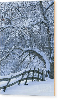 Winter Fence Wood Print by Alan L Graham