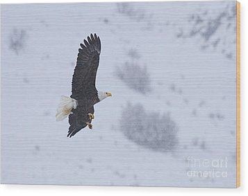 Winter Flight Wood Print by Mike  Dawson