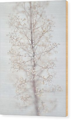 Wood Print featuring the photograph Winter Flower by Suzanne Powers