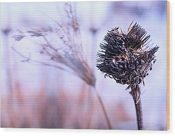 Winter Flowers  Wood Print by Bob Orsillo