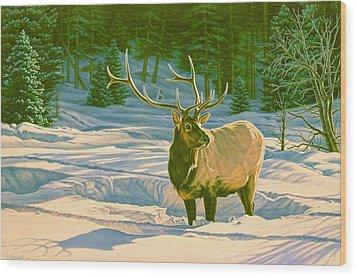 Winter Forage - Elk Wood Print by Paul Krapf